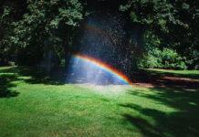 Jak sprawić by trawnik był piękny?