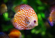 Akwarium w Twoim domu