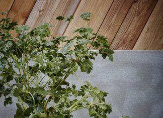Jakie donice do ogrodu, a jakie na taras?