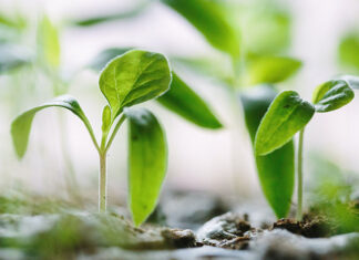 rośliny z ogrodu
