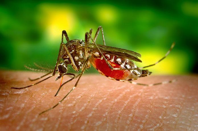 Jak się nie dać muchom i komarom